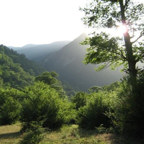 پارک جنگلی قرن آباد